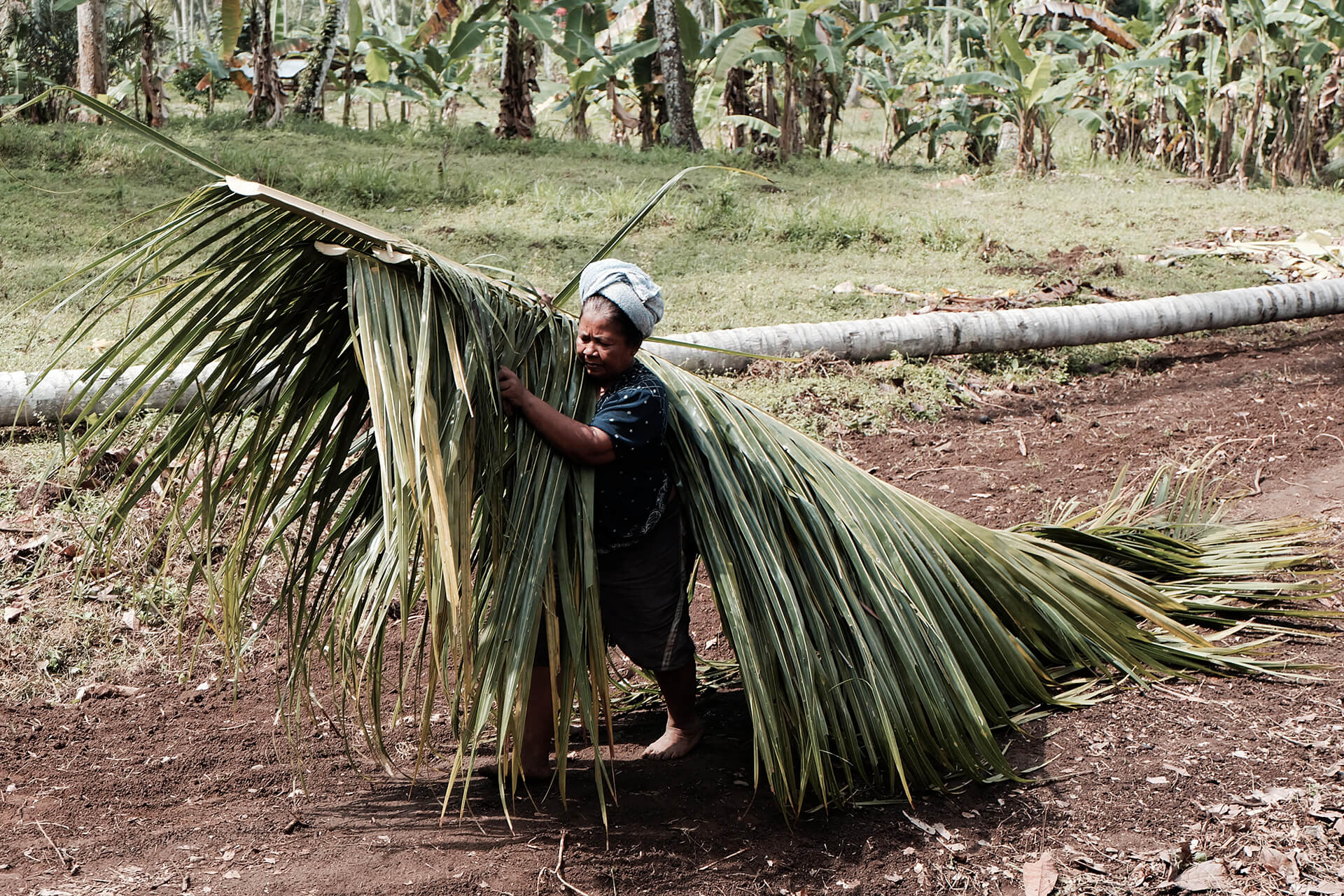 a coconut leaf being carried by a Balinese farmer to create a tropical traditional architecture