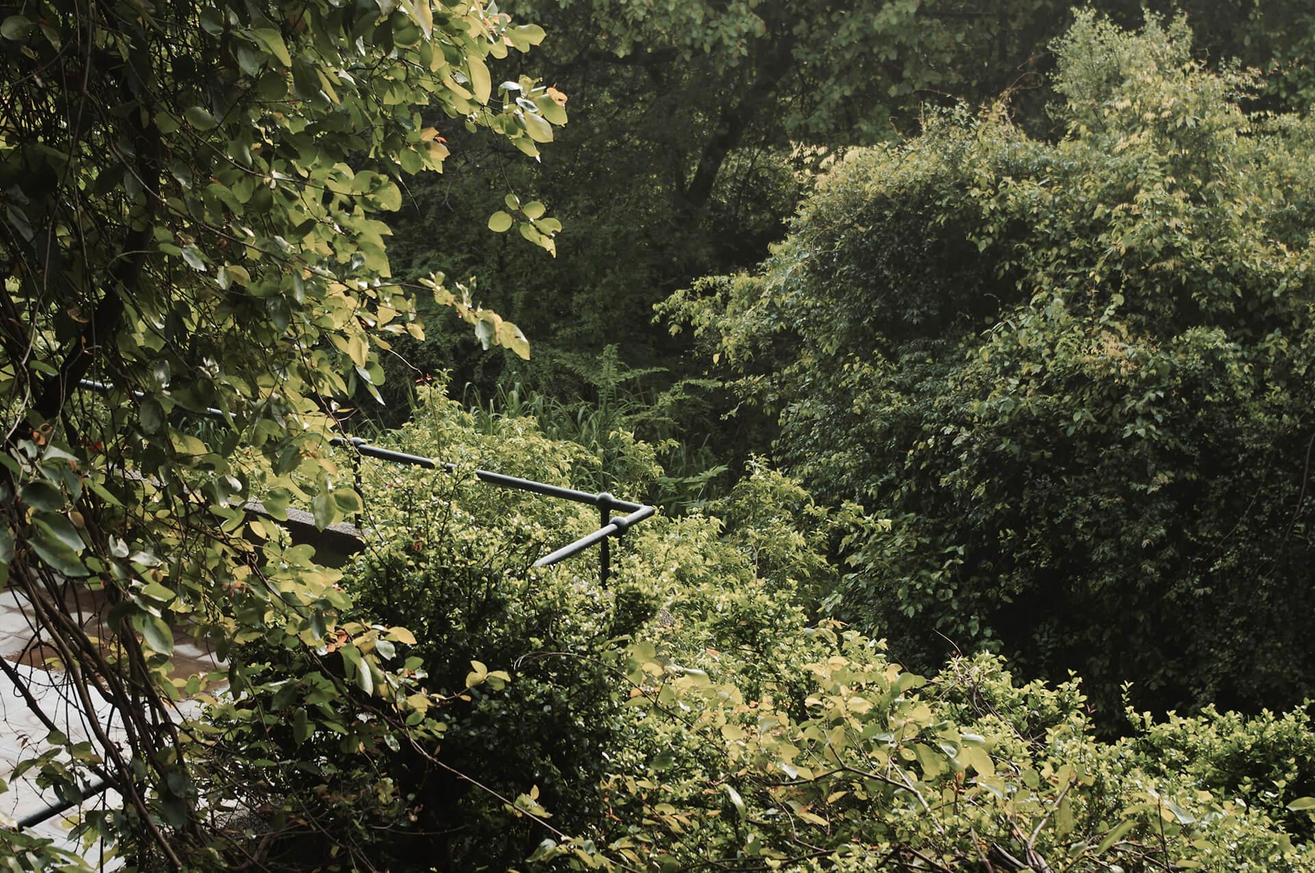 Kandalama balcony hanging into the tropical landscape